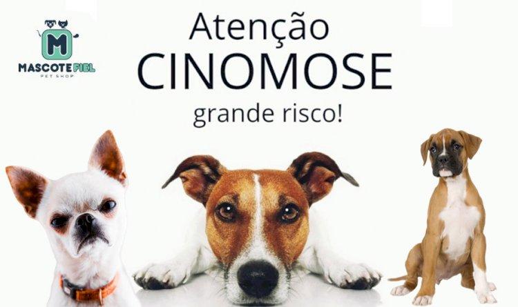 Médica Veterinária comenta sobre surto de Cinomose nos Pets