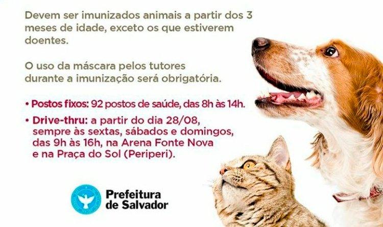Campanha de vacinação antirrábica para cães e gatos terá sistema drive-thru.