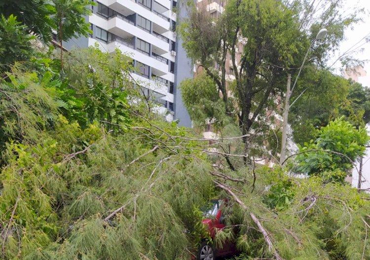 Chuva com vento derruba árvores e danifica carros.